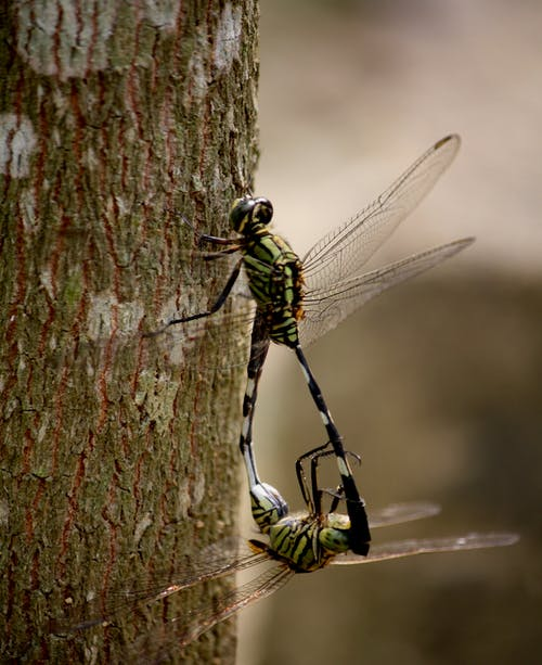 Shallow Focus Photography of Two Green Dragonflies