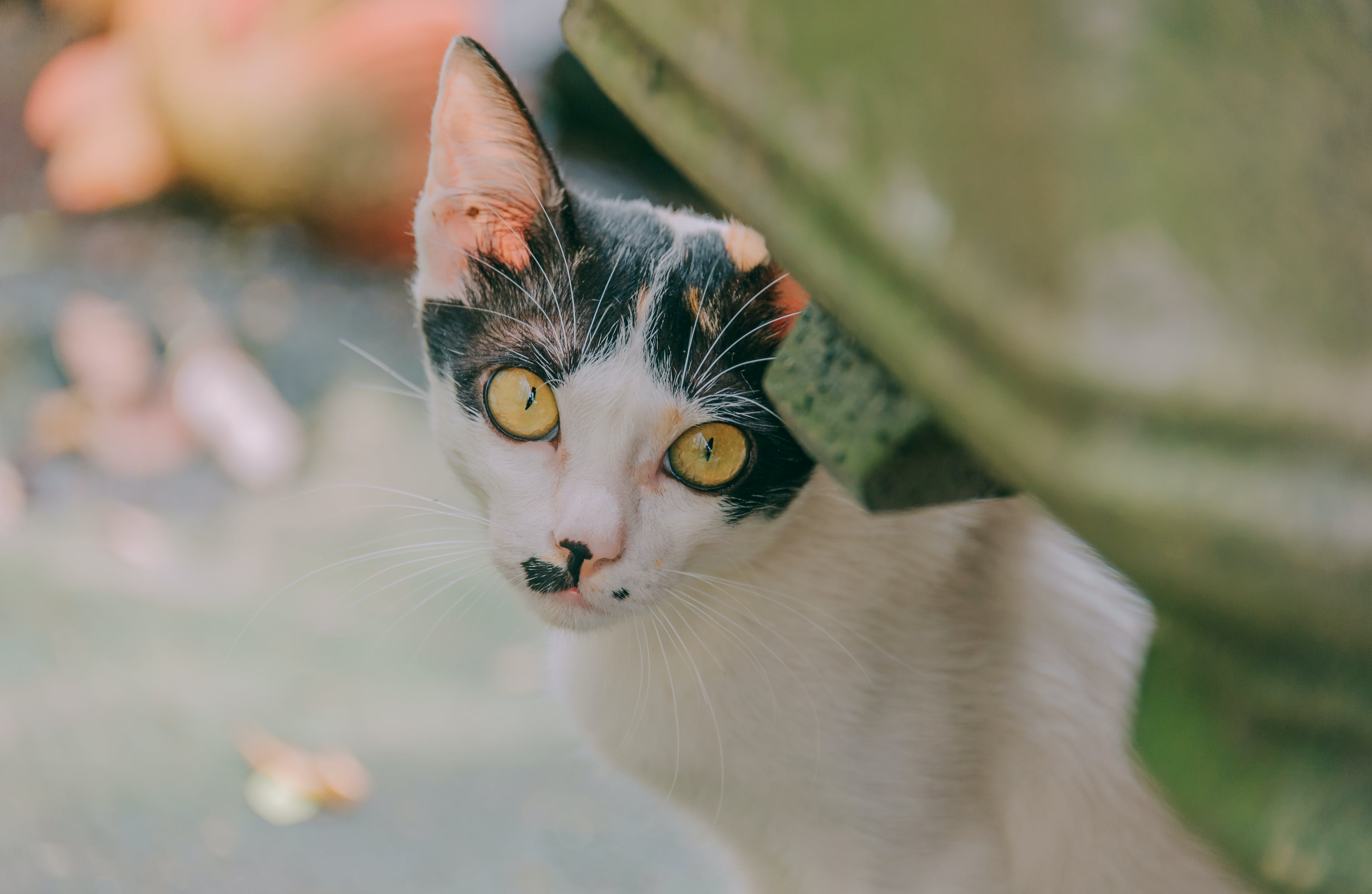 Close-up Photography of White and Black Cat