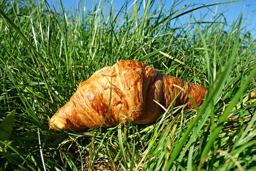 Free stock photo of bread, brown, croissant, croissant in the grass