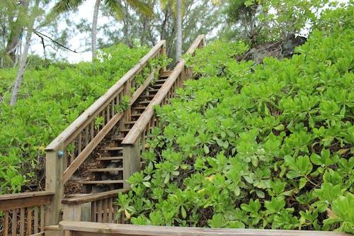 Kostenloses Stock Foto zu deck, dock, grün, holztreppen