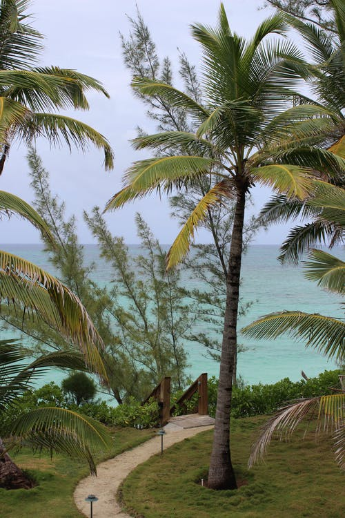 Ilmainen kuvapankkikuva tunnisteilla palmu, palmupuut, polku, sininen vesi