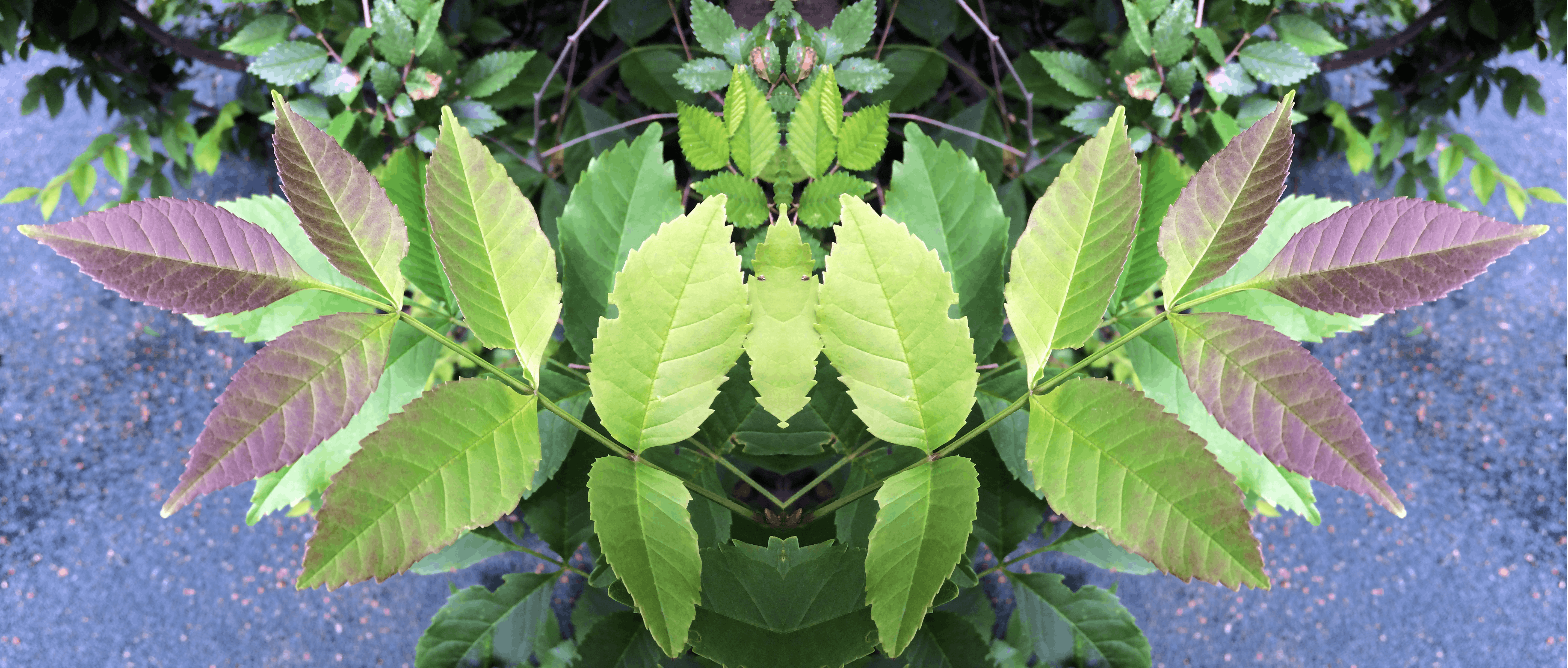 Free stock photo of fear, green, leaves, nature