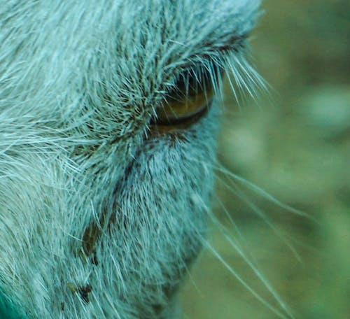 Kostnadsfri bild av adevnture, belgien, djup, djur