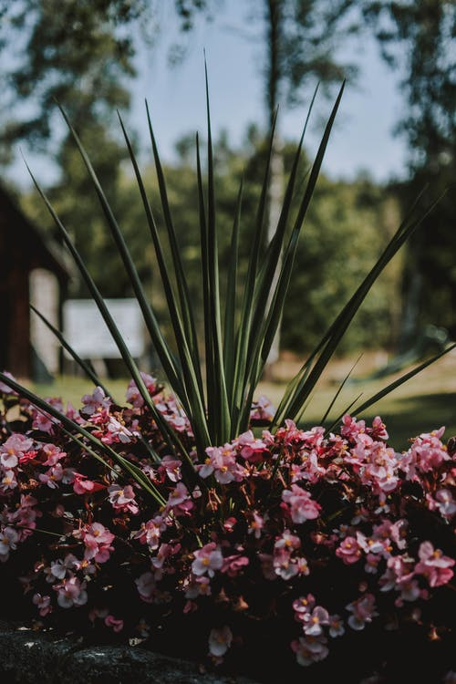 Shallow Focus Photography of Pink Flower Bush