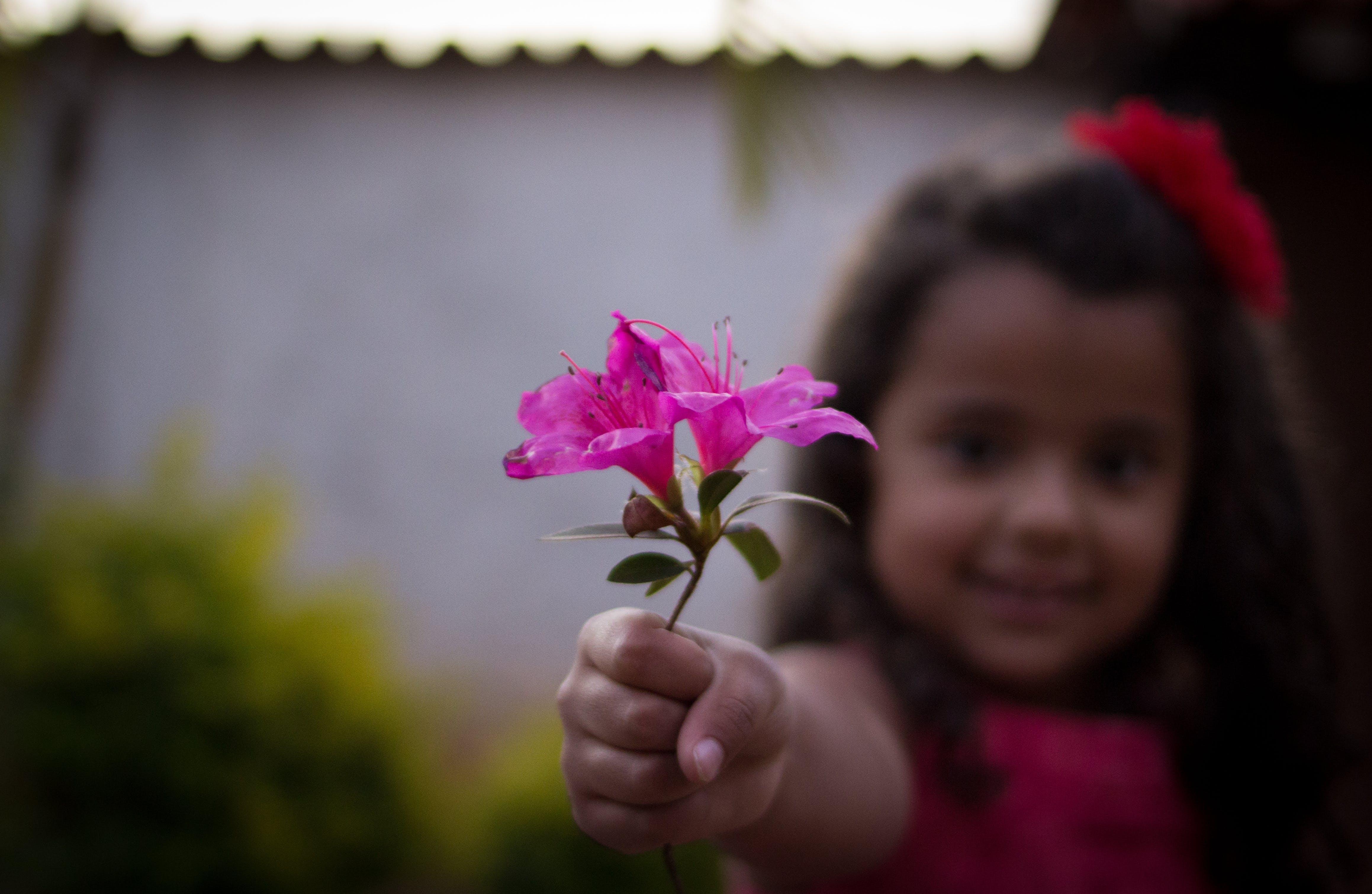 Free stock photo of girl, flower, child, cute girl