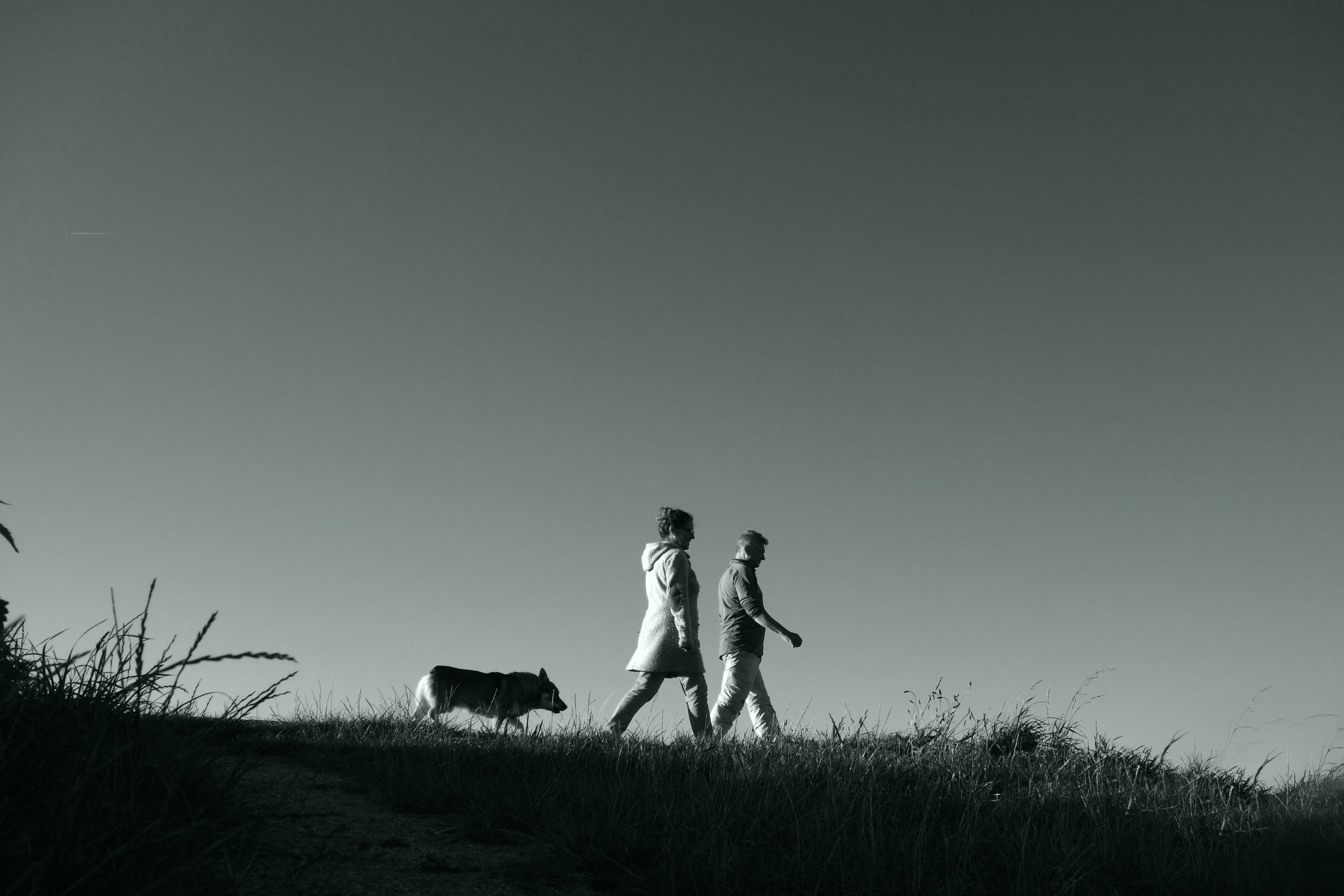 Free stock photo of person, people, walking, silhouette