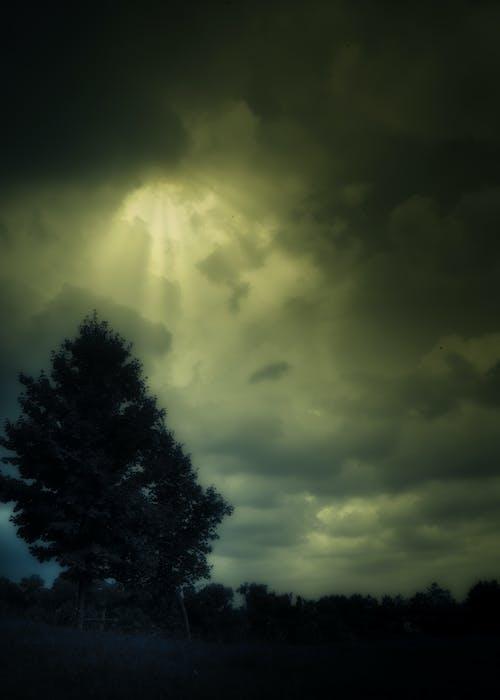 Gratis lagerfoto af grøn, skyer, storm, æbletræ