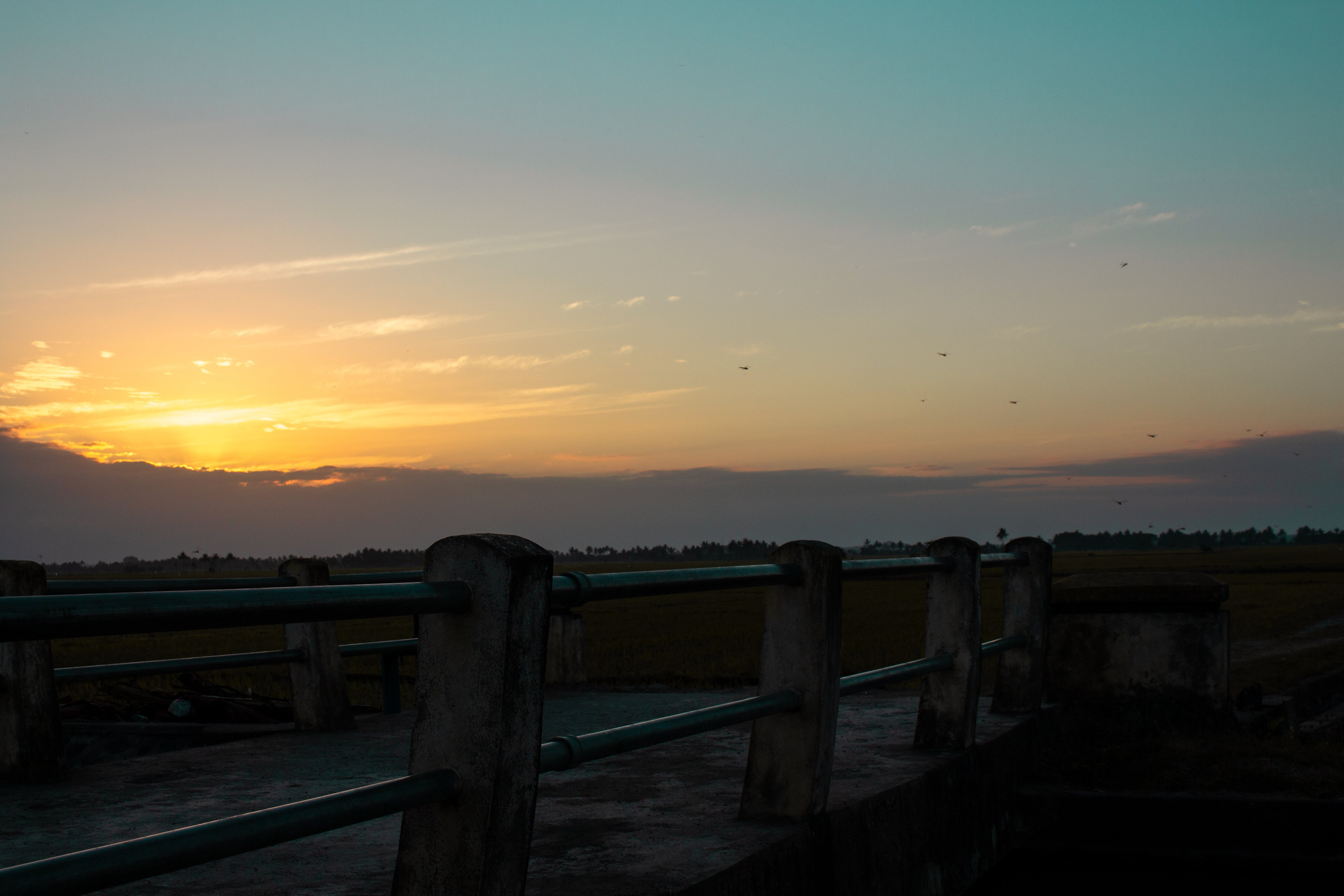 Free stock photo of bridge, dragonfly, rice fields, sunrise