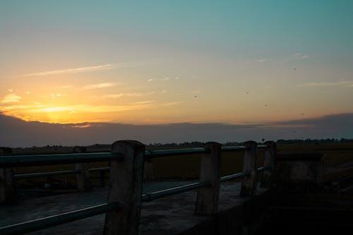 Základová fotografie zdarma na téma most, rýžová pole, svítání, vážka