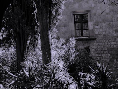 Ilmainen kuvapankkikuva tunnisteilla ikkunat, puut, vanha talo