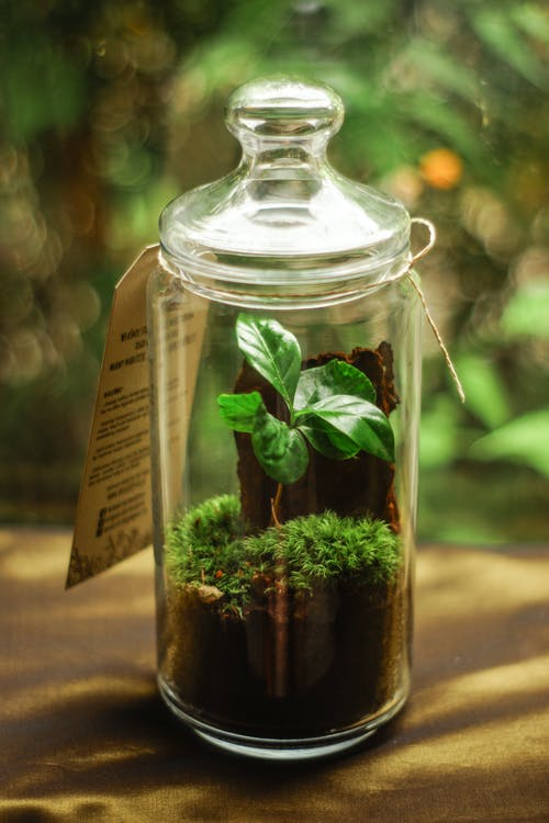 Glass jar with colorful fresh basil