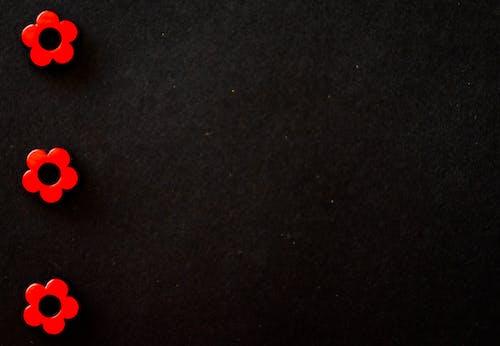 Darmowe zdjęcie z galerii z ciemny, czarne tło, kolory, kwiaty