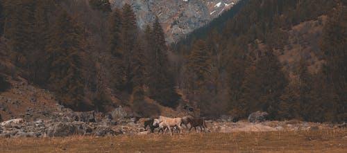 Gratis lagerfoto af afstand, biograf, bjerge, film