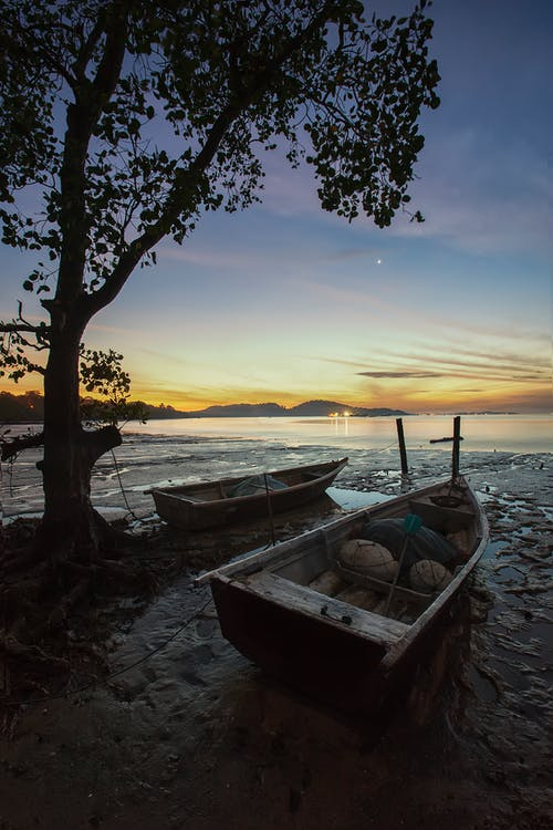 2 Boats on Seashore Beside Brown Tree