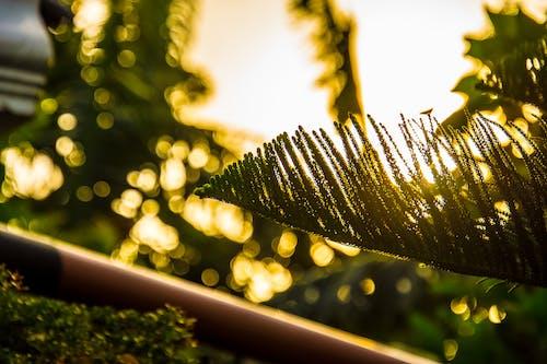 Foto profissional grátis de árvores, golden sun, nascer do sol
