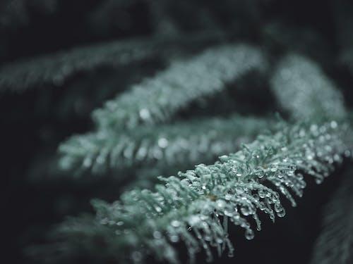 冷, 分公司, 分枝, 寒冷 的 免费素材照片