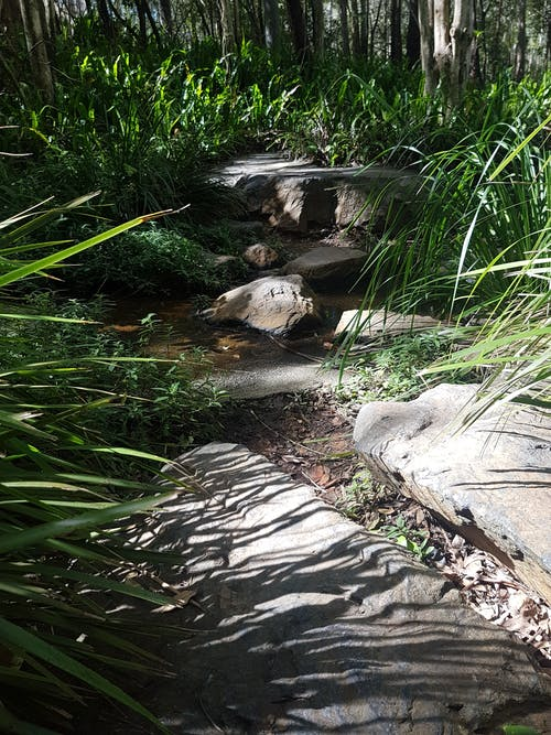 Free stock photo of botanic, botanic garden, greenery, rocks