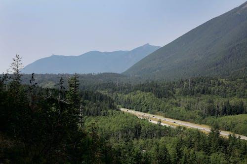 Photos gratuites de arbres, brouillard, brumeux, lumière du jour