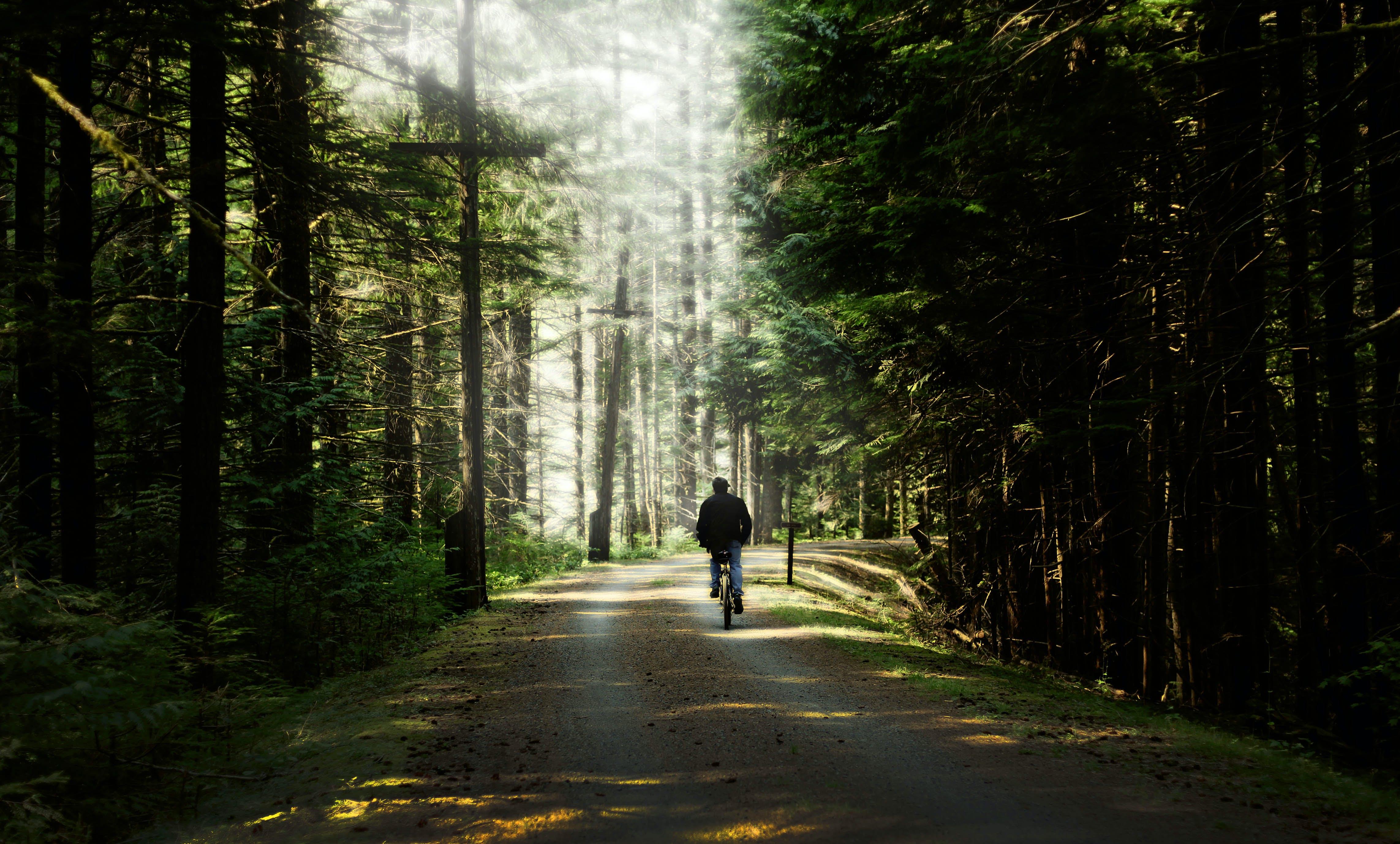 Kostenloses Stock Foto zu bäume, holz, person, pfad