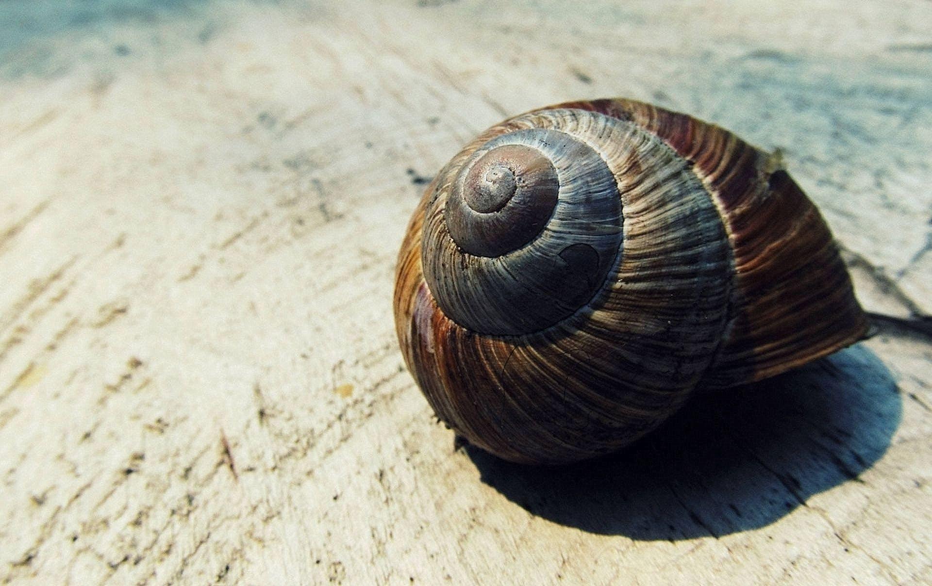 Gratis lagerfoto af bløddyr, hav, hvirvelløse, makro