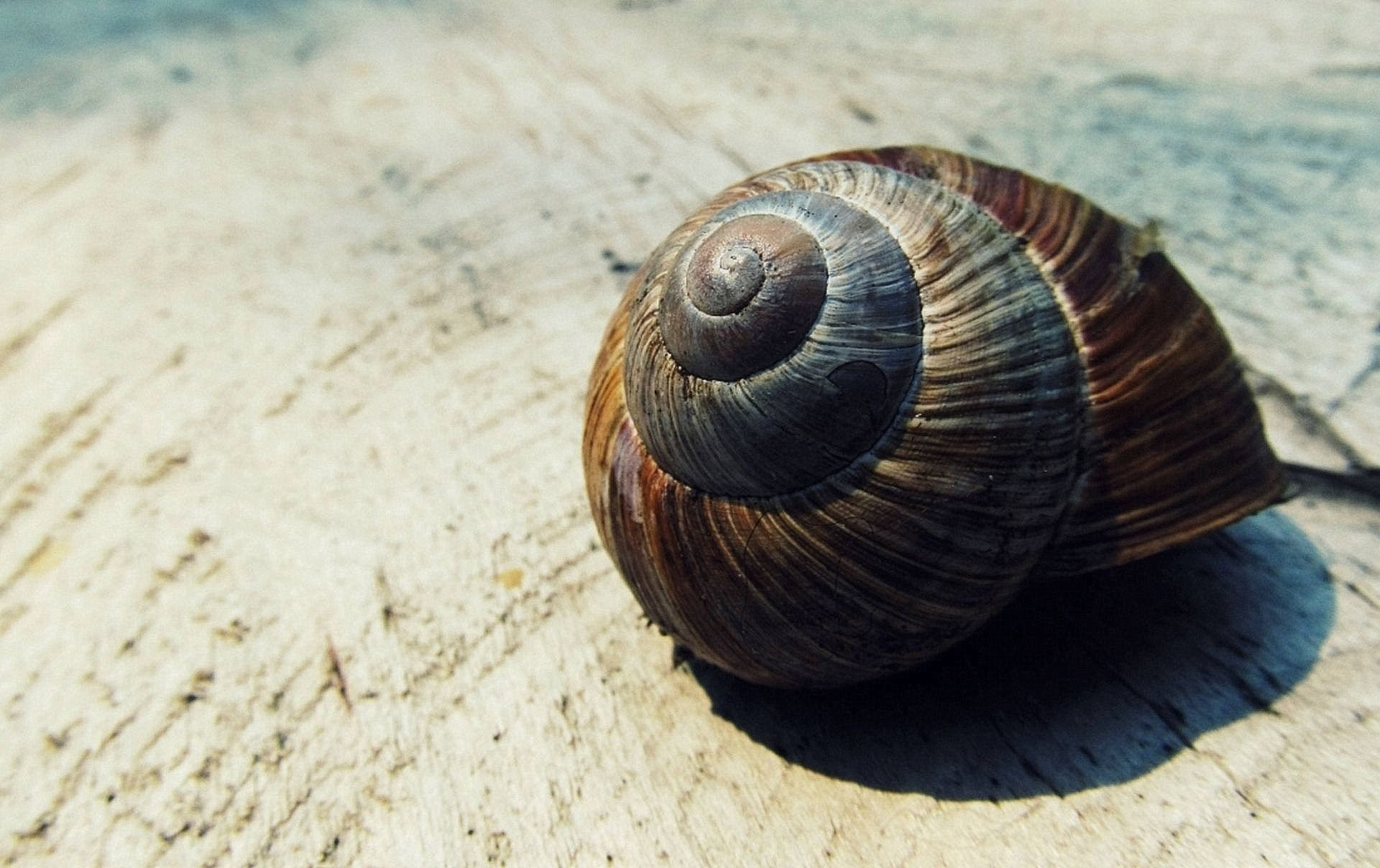 Black and Brown Snail Shell on Beige Textile