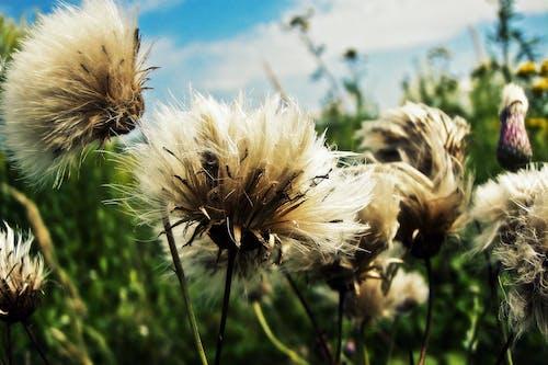 Gratis lagerfoto af bane, blomster, blomstrende, blød