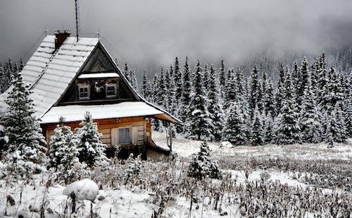 Imagine de stoc gratuită din alb, alba ca zapada, albastru, anotimp