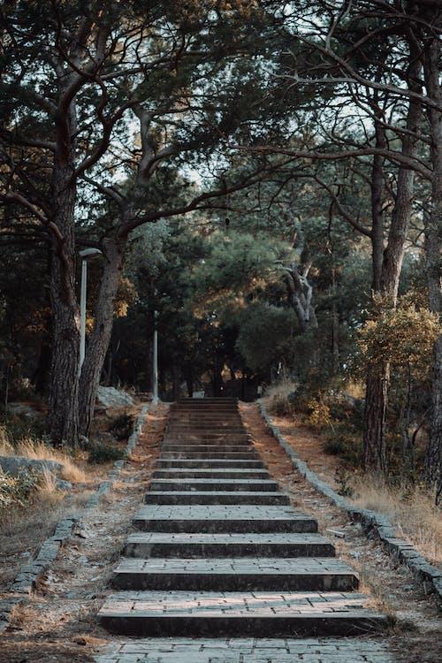 Kostnadsfri bild av gångstig, park, steg, träd