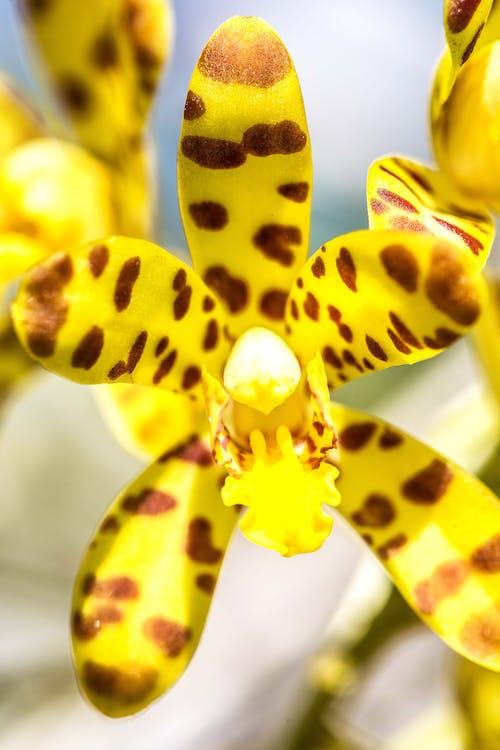Gratis arkivbilde med blomst, makro, natur, orkidé