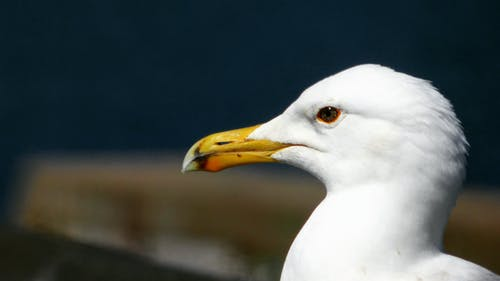 Free stock photo of blurred, seagull