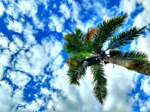 Free stock photo of blue sky, clouds, sky, trees