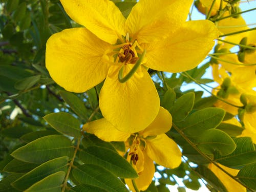 Free stock photo of flower, nature, yellow