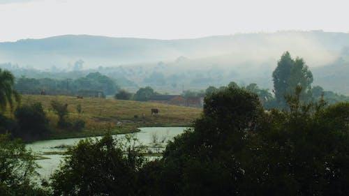 Free stock photo of farm, fog, peace, tranquility