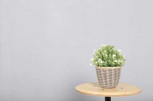 foto, suni çiçekler içeren Ücretsiz stok fotoğraf