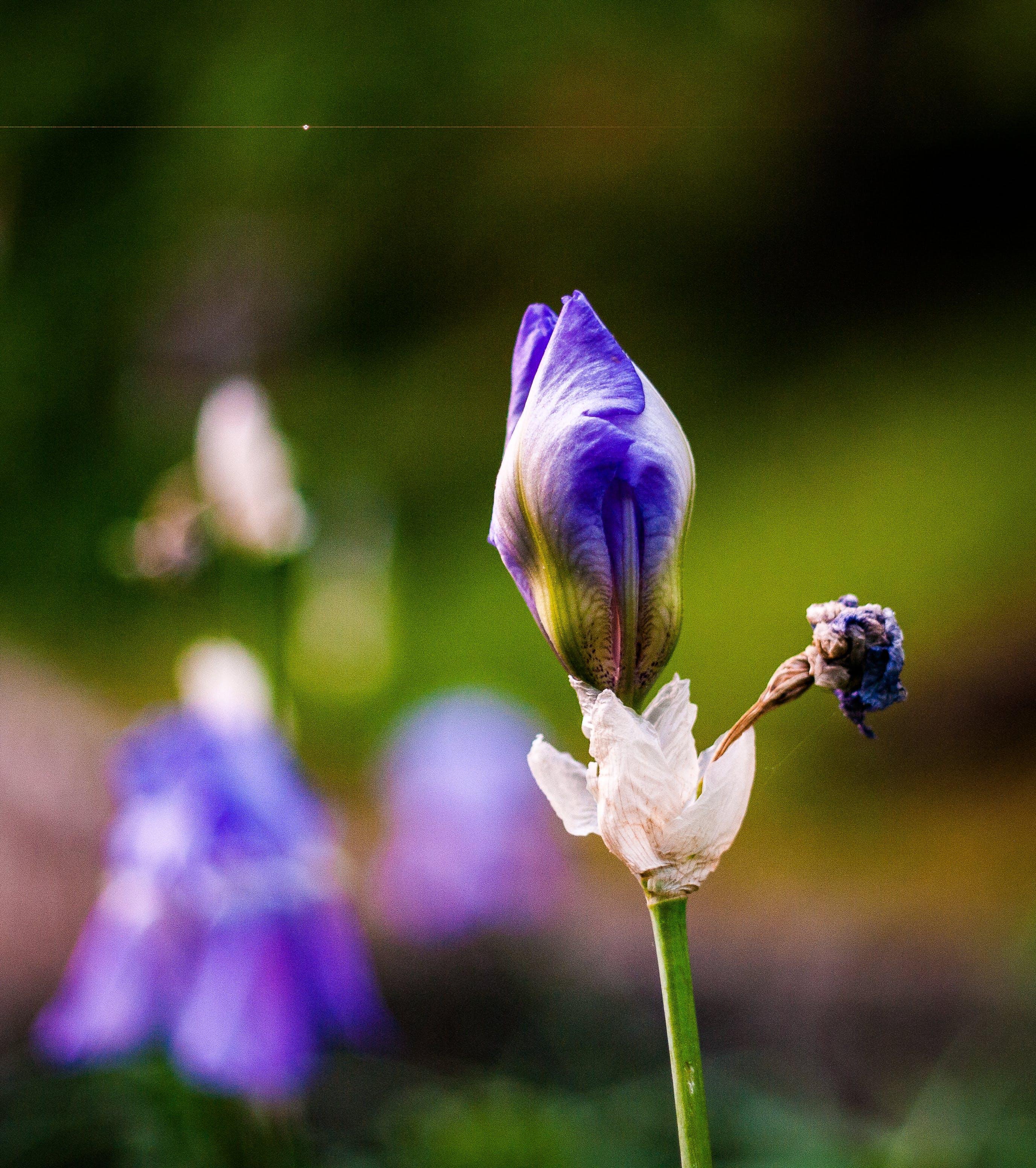 Foto profissional grátis de flor, flor lilás, flores bonitas, mãe natureza