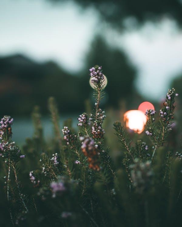 exposición larga, flores, fondo borroso