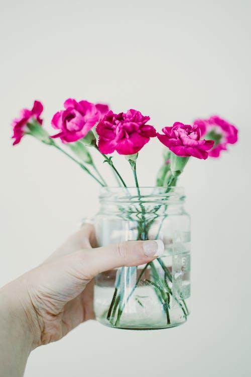 agua, botánico, brillante