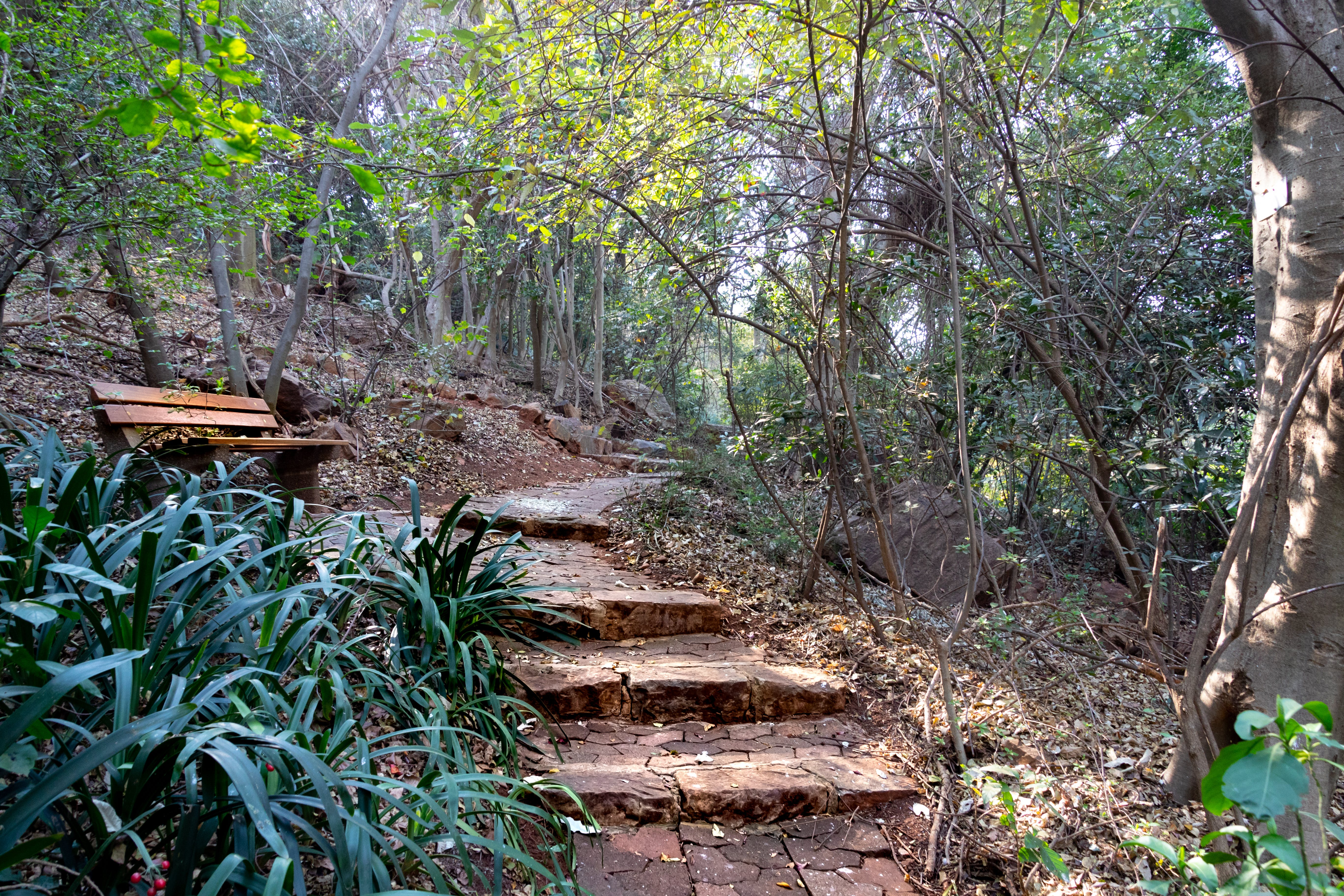 Free stock photo of bench, nature, garden, adventure