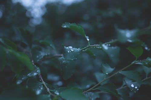 คลังภาพถ่ายฟรี ของ ต้นไม้, น้ำ, น้ำค้าง, ฝนตก