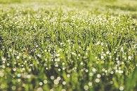 dawn, field, summer