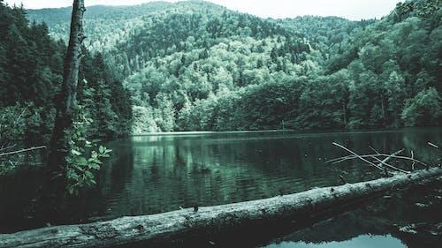 パーク, ログ, 反射, 山岳の無料の写真素材