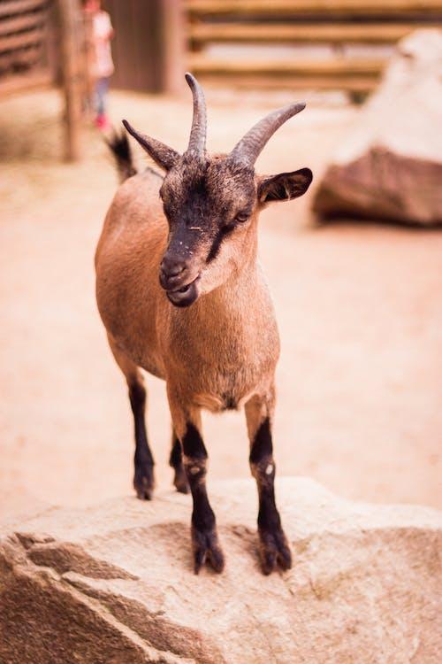 動物, 動物攝影, 動物肖像