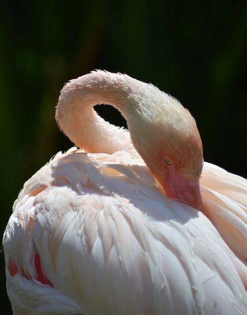 White Flamingo Under Sunny Sky