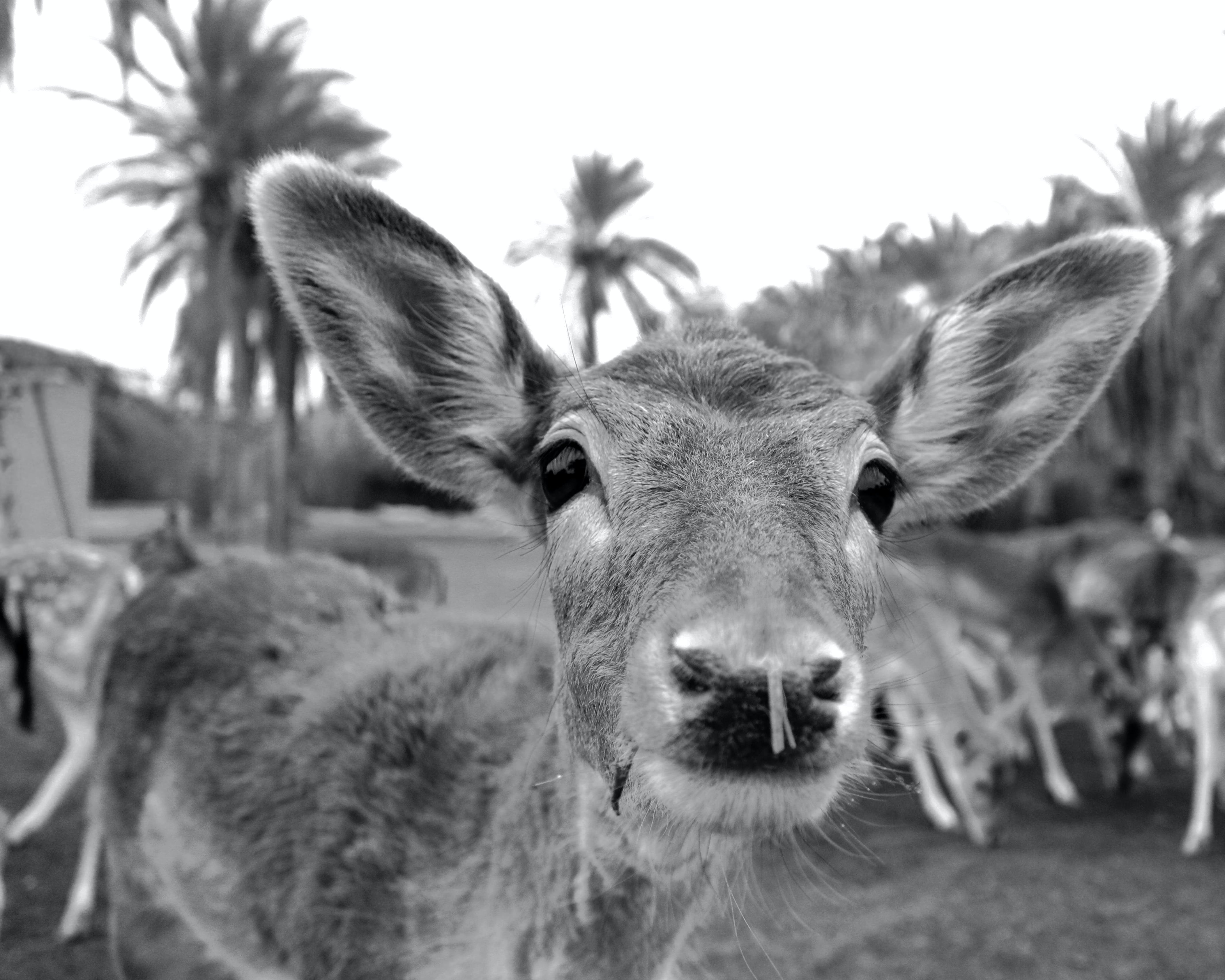 Free stock photo of africa, animals, black and white, photography