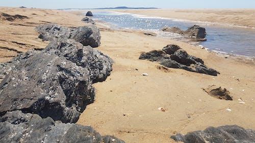 Free stock photo of beach, oysters, rocks, rocky beach