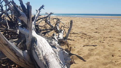 Free stock photo of Blue ocean, blue skies, driftwood, sand