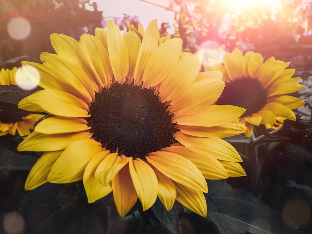 вродлива, вродливий, жовта квітка