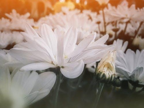 Gratis lagerfoto af baggrund, blomst, blomster, hvid blomst