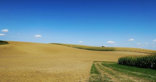 คลังภาพถ่ายฟรี ของ ชนบท, ท้องฟ้าสีคราม, ธรรมชาติ, นา