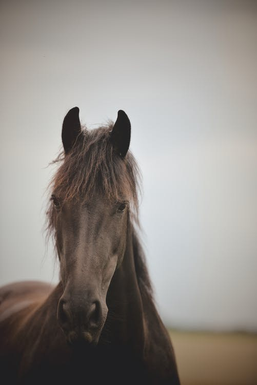 cal, liniște, peisaj